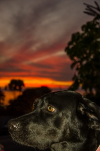 tucker'ssunset